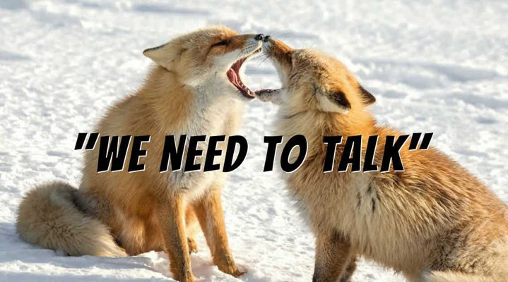 "Two red foxes in snow, face to face with their mouths open, looking as though they are shouting at each other. ""We Need To talk"" lettering is superimposed on image."