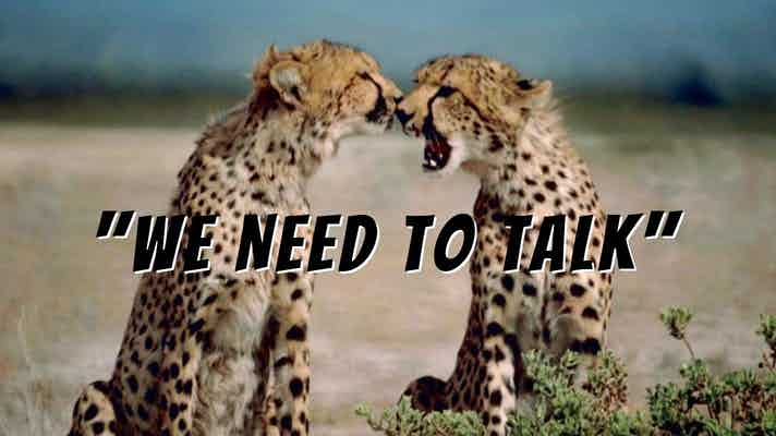 "Two cheetahs, sitting, facing each other. One has its mouth wide open. Text says, ""We Need To Talk"""