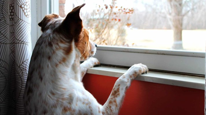 Dog looking out of window waiting patiently for owner's return